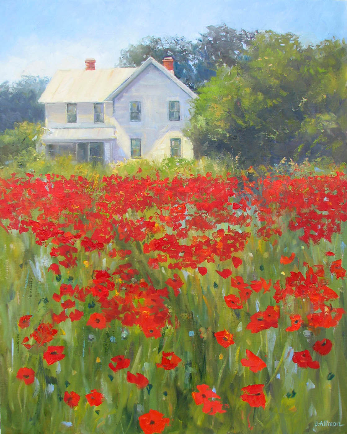 red_poppies_in_a_field21