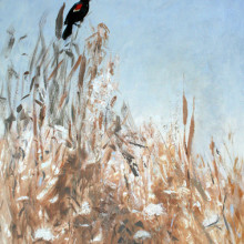 redwing_blackbird1